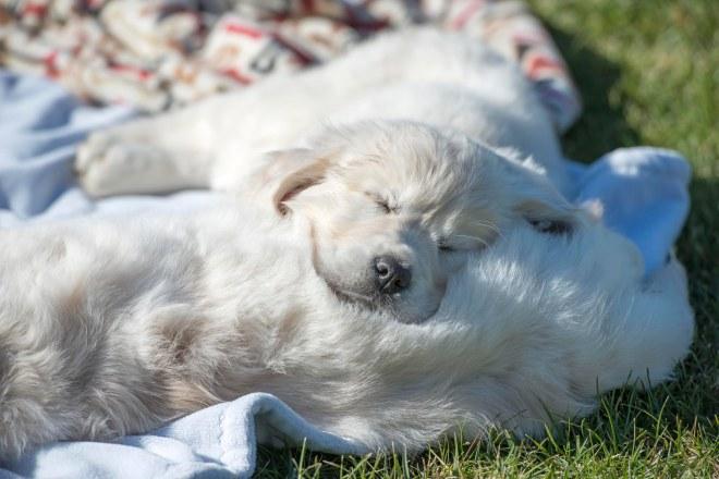 Puppy Test_DSC_9281