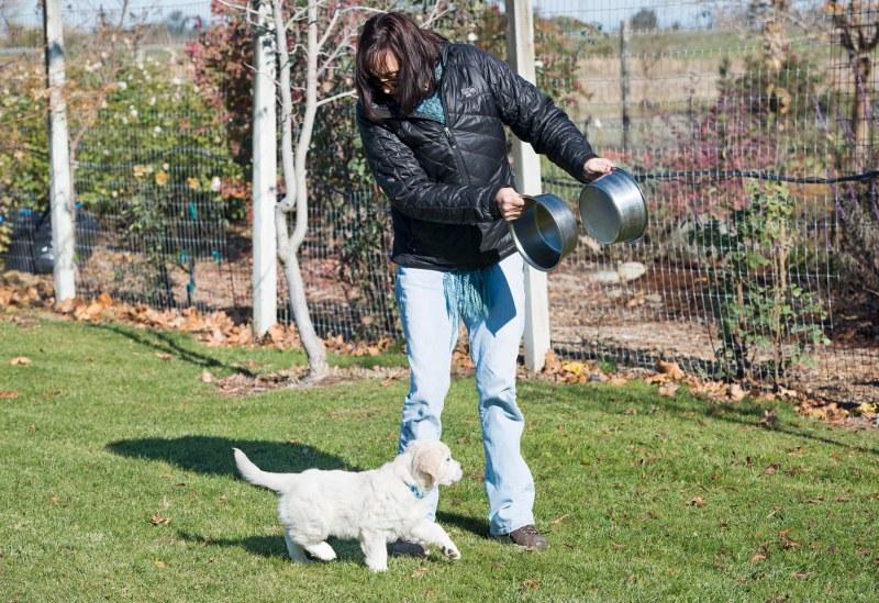 Puppy Test_DSC_9299