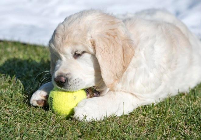 Puppy Test_DSC_9314