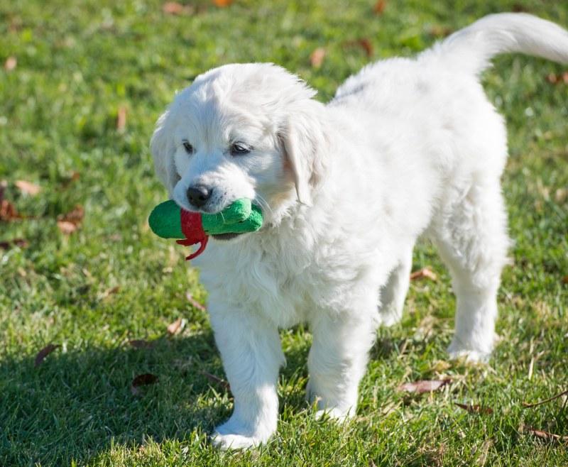 Puppy Test_DSC_9321