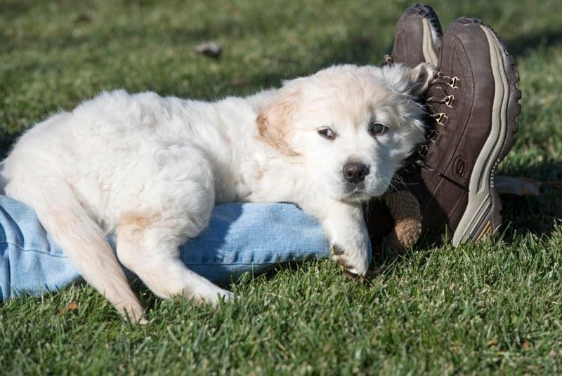 Puppy Test_DSC_9323