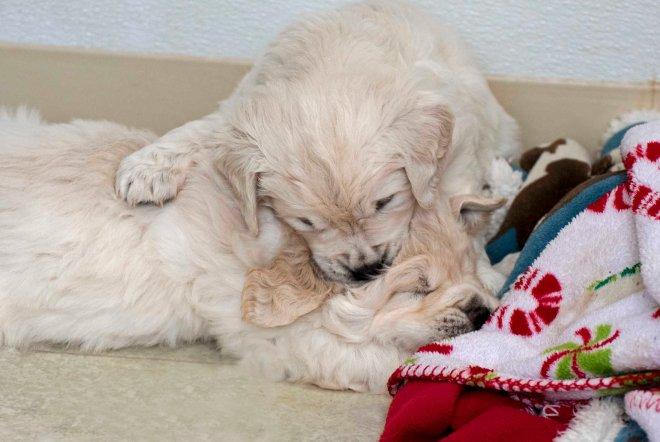 Puppy_Rumble_DSC_2516