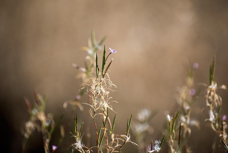 Seeds_Flower_Full_DSC_2445