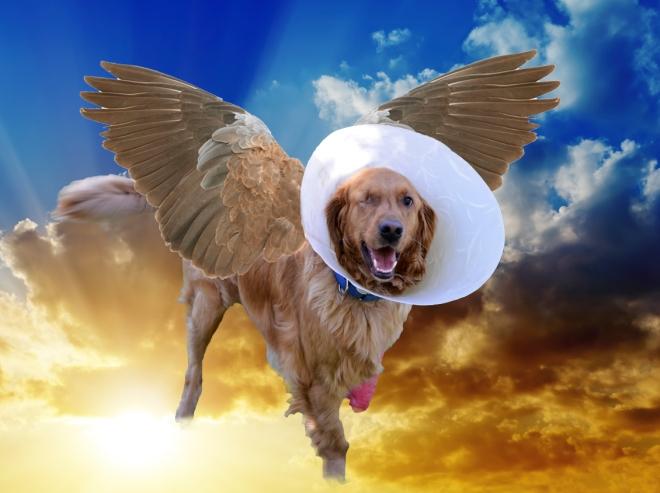 Injured-Dogs