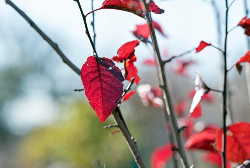 Leaf_CZ_M85_DSC_3832
