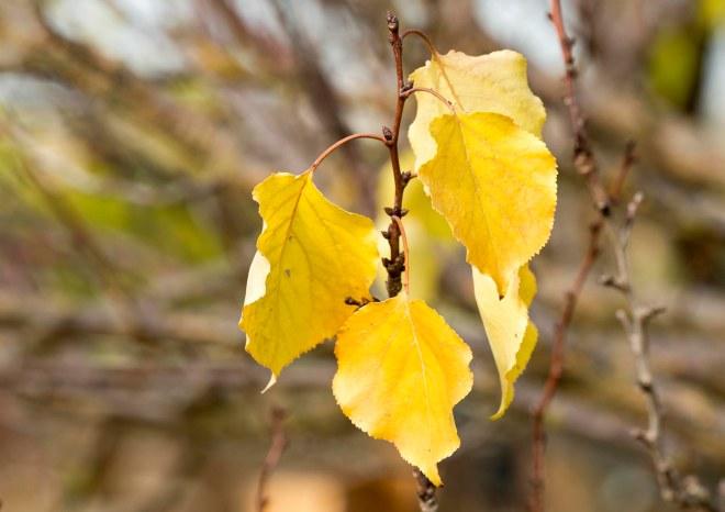 Leaves_DSC_9439