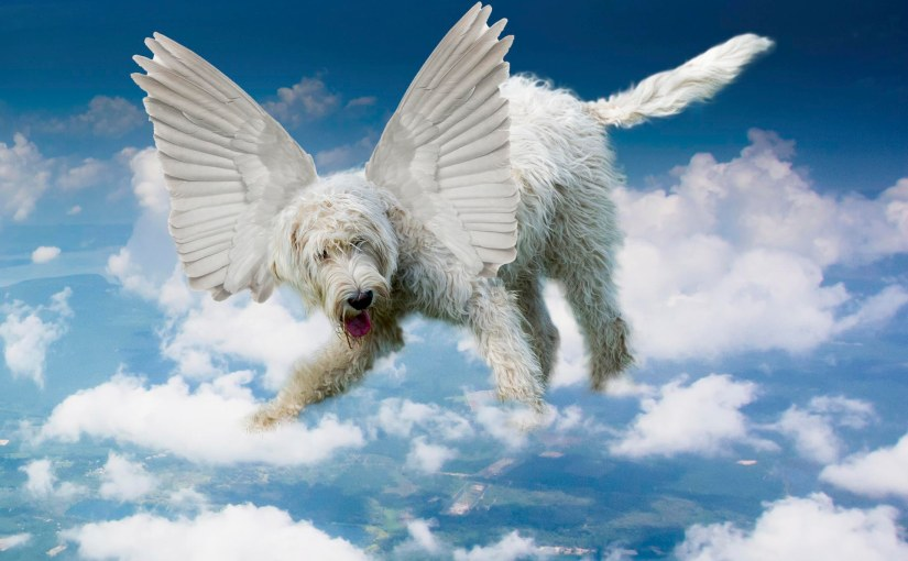 If Dogs CouldFly