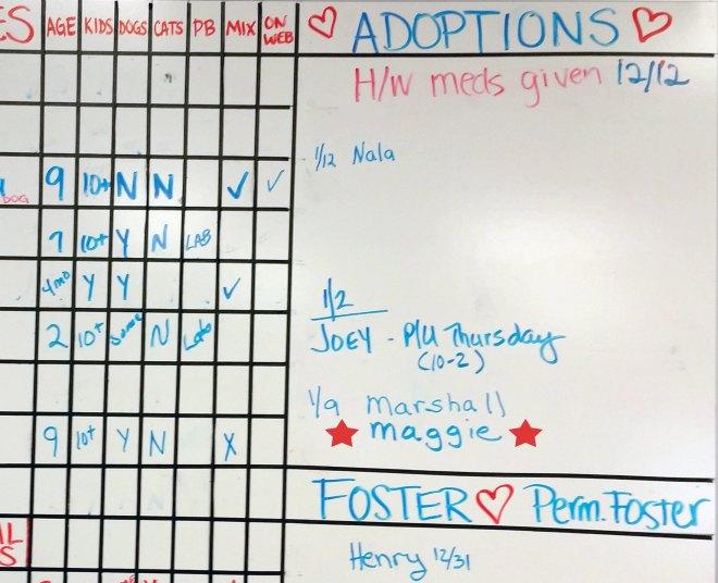 Adoption-Board