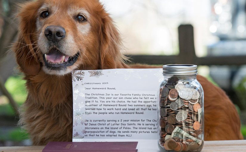 A Christmas Jar for theDogs