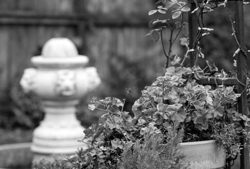 Fountain_DSC_1286
