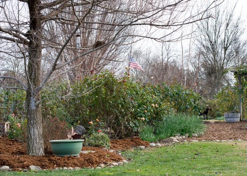 Garden_January_DSC_0731