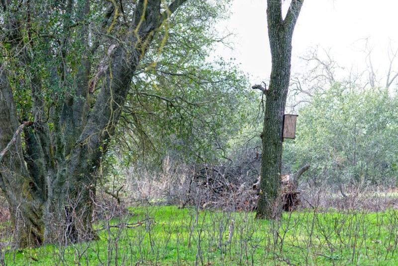 Meadow_DSC_1467