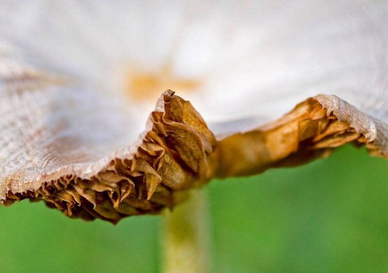 Mushroom_DSC_1460