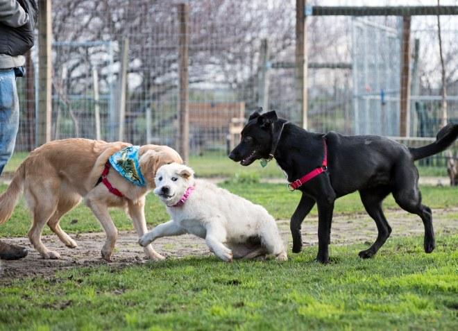Puppy Class_DSC_4549