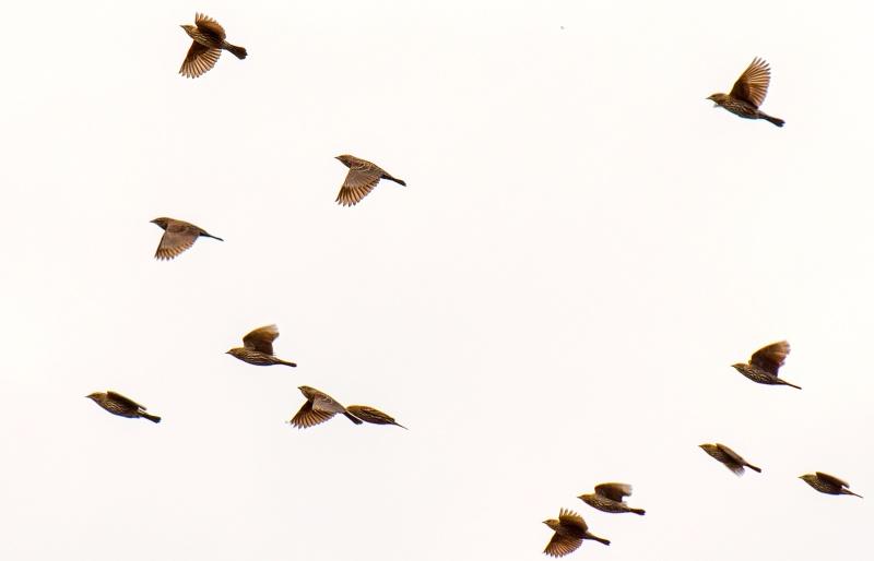 Birds_Flight_DSC_0867