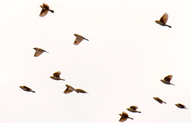 Birds_Flight_DSC_0867
