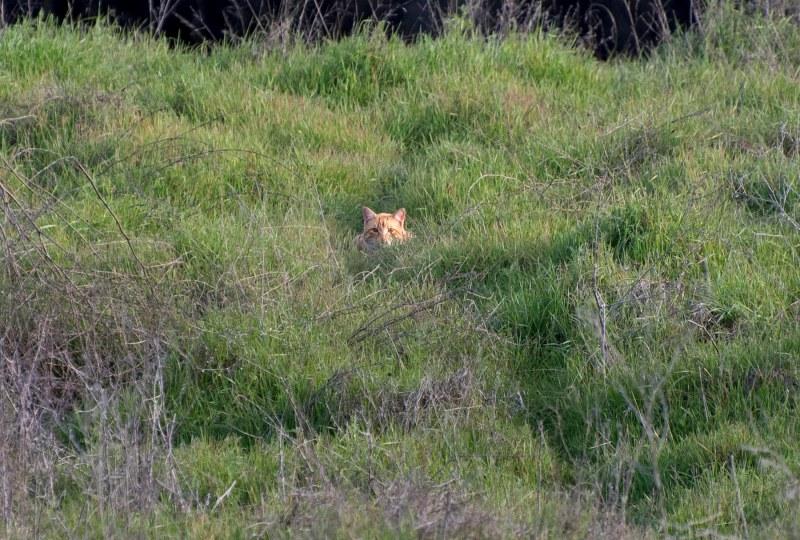 Cat_Meadow_DSC_4879
