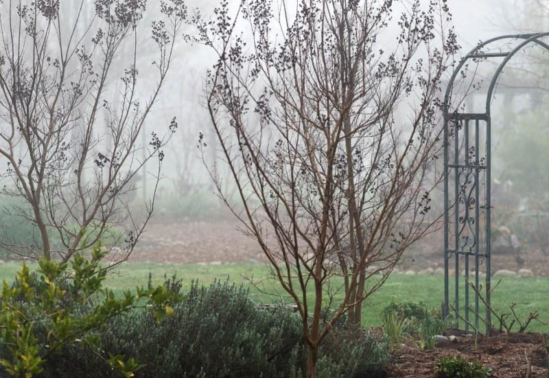 Garden_Fog_DSC_2844