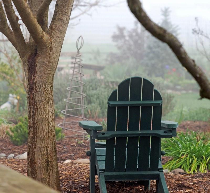 Garden_Fog_DSC_2852