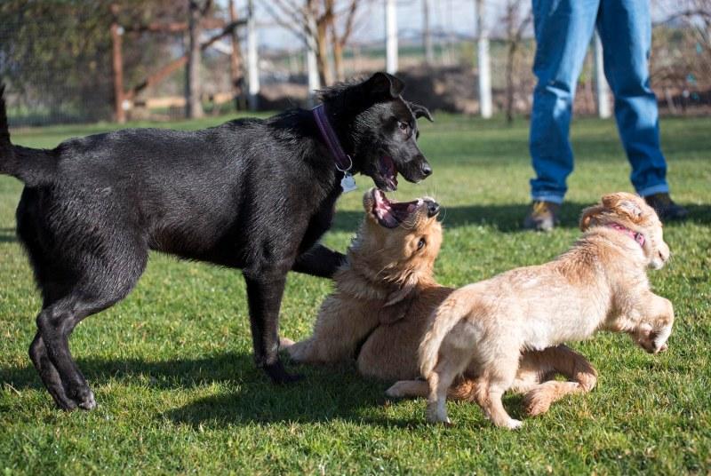 Puppy Class_DSC_4679