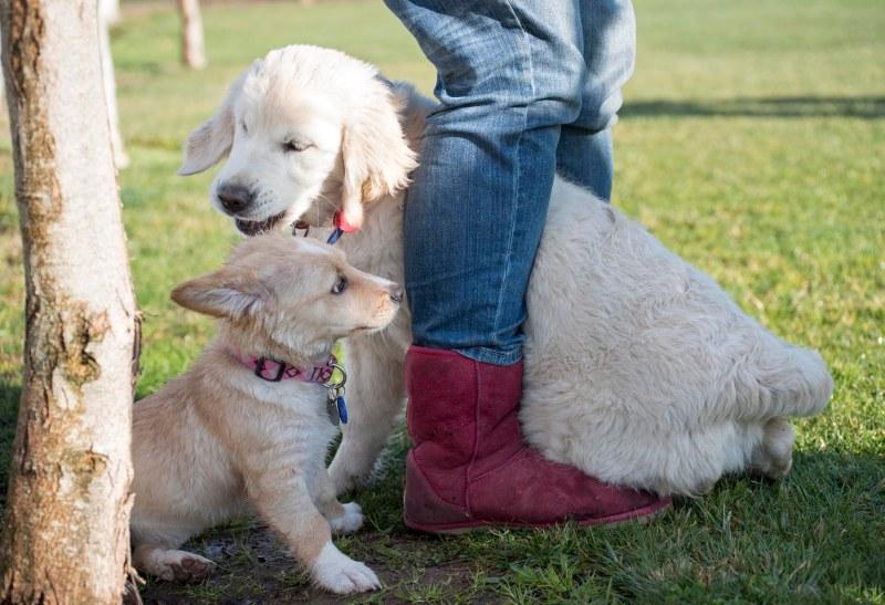 Puppy Class_DSC_4696