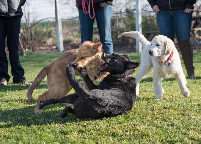 Puppy Class_DSC_4700