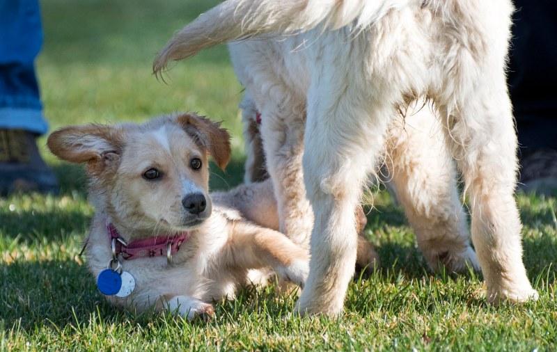 Puppy Class_DSC_4731