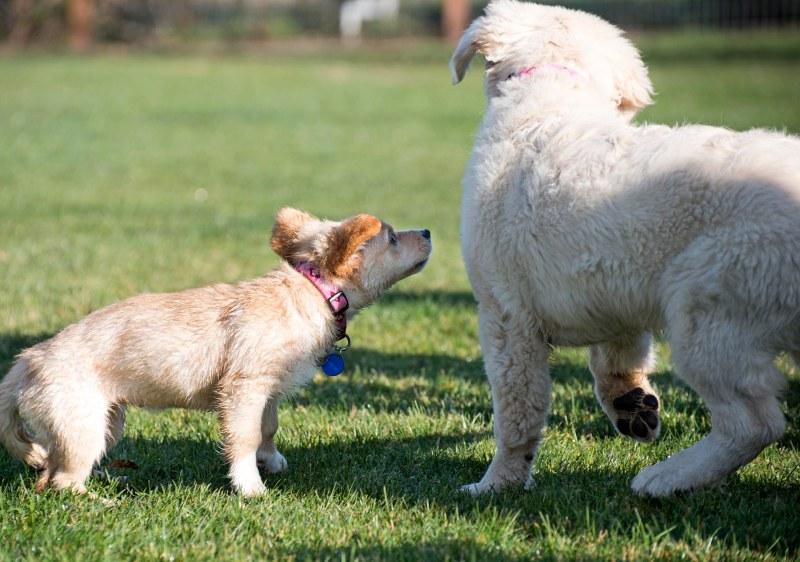 Puppy Class_DSC_4767