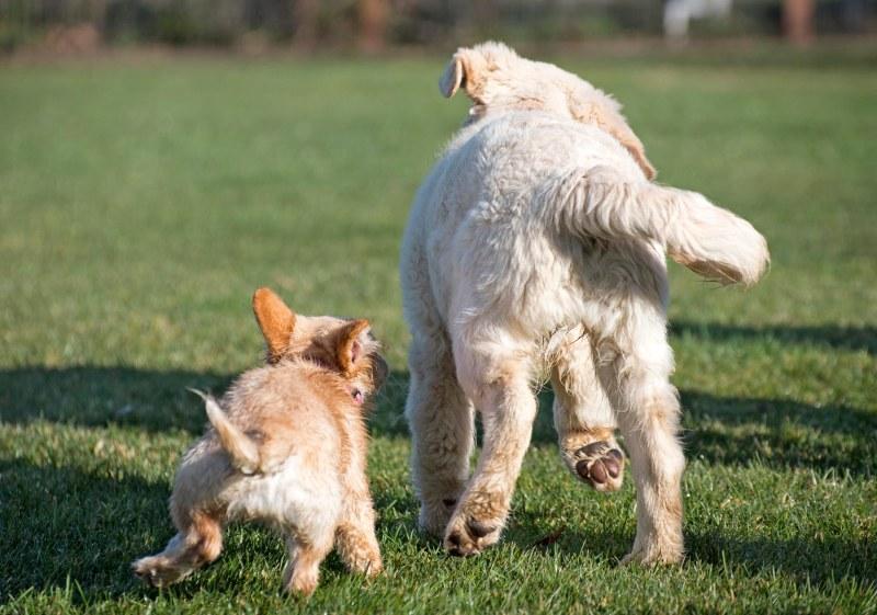 Puppy Class_DSC_4769
