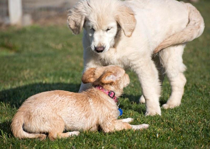 Puppy Class_DSC_4770