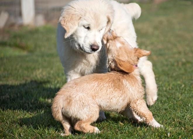 Puppy Class_DSC_4771