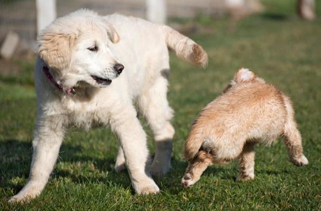 Puppy Class_DSC_4772