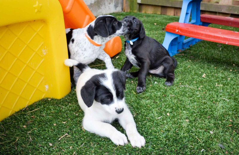 Easter_Puppies_DSC_0100