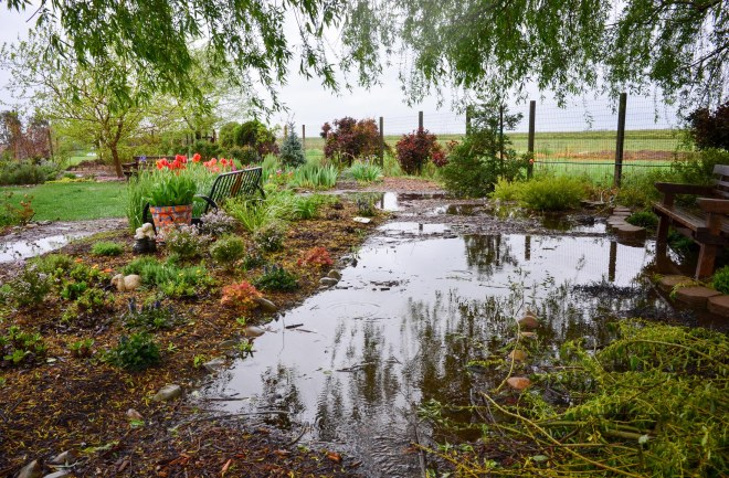 Garden_Rain_DSC_0032
