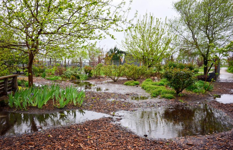 Garden_Rain_DSC_0033