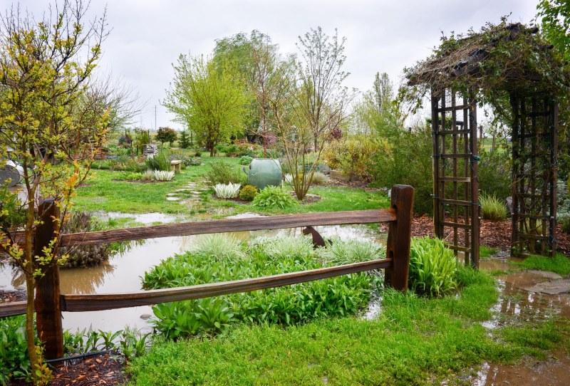 Garden_Rain_DSC_0038