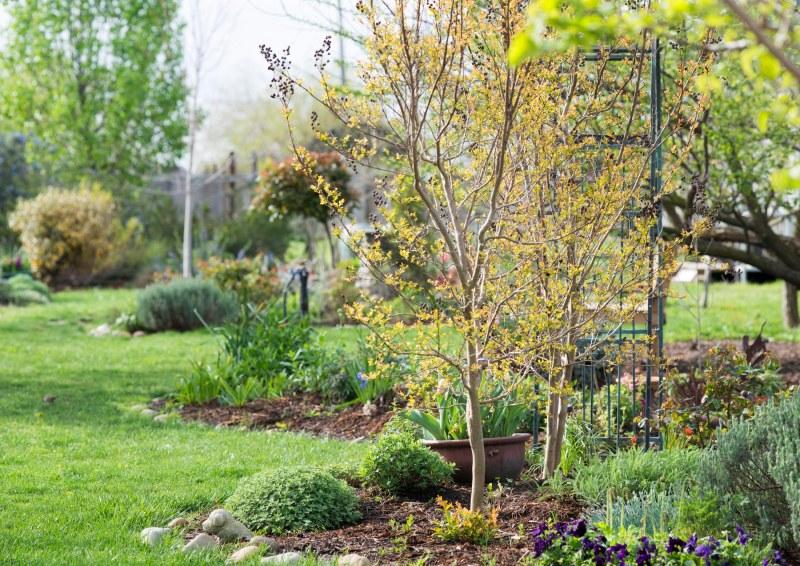 Garden_Spring_DSC_3369