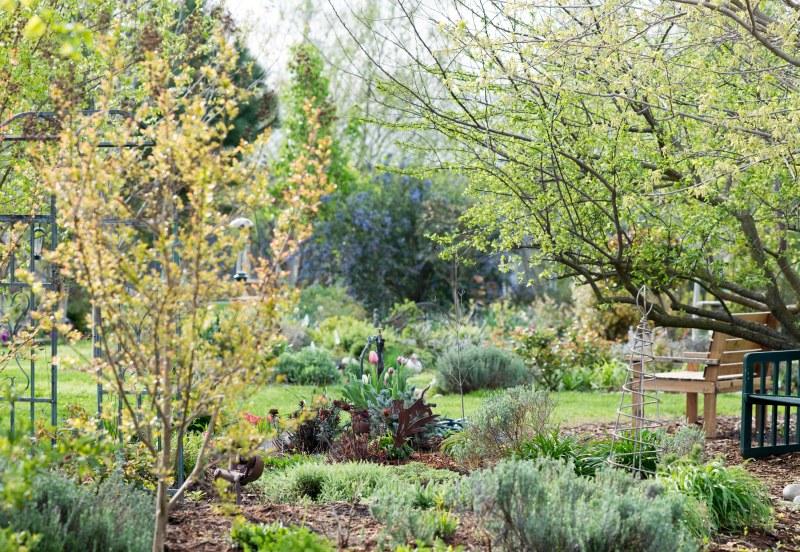 Garden_Spring_DSC_3370