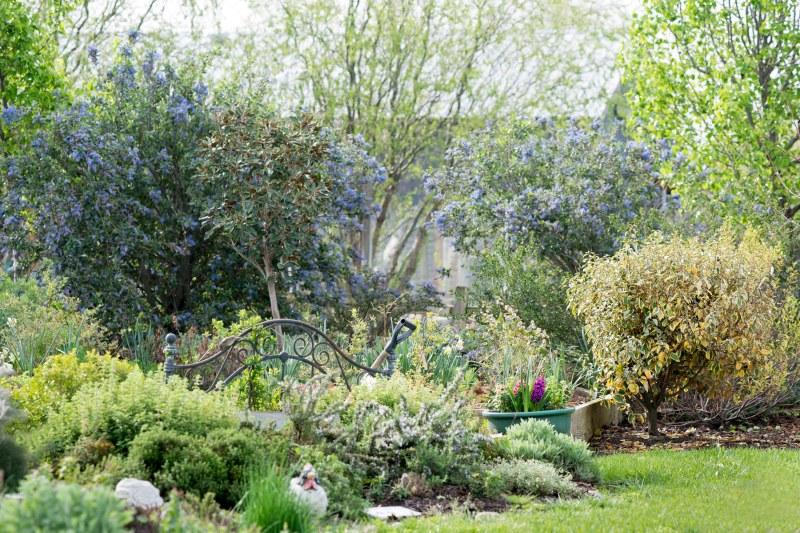 Garden_Spring_DSC_3376