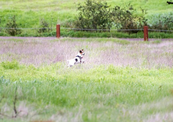 Meadow Dog_DSC_5363