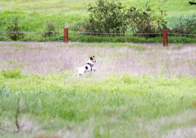 Meadow Dog_DSC_5363