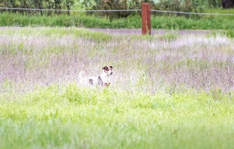 Meadow Dog_DSC_5370