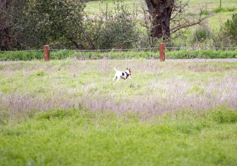 Meadow Dog_DSC_5372