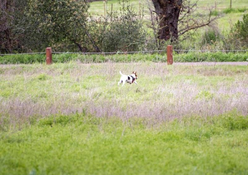 Meadow Dog_DSC_5372