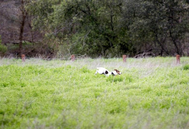 Meadow Dog_DSC_5377