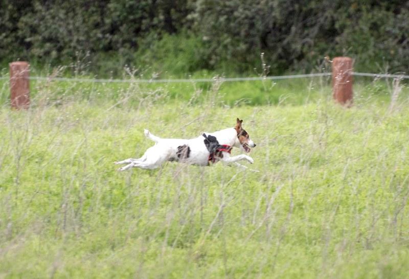 Meadow Dog_DSC_5383
