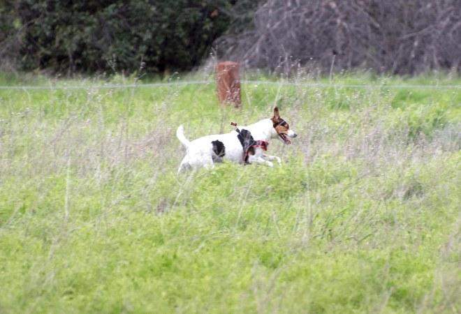 Meadow Dog_DSC_5386
