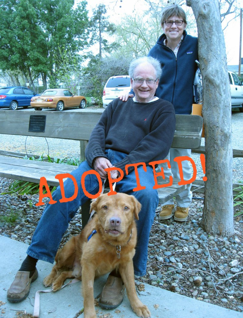 Ned_Adopted