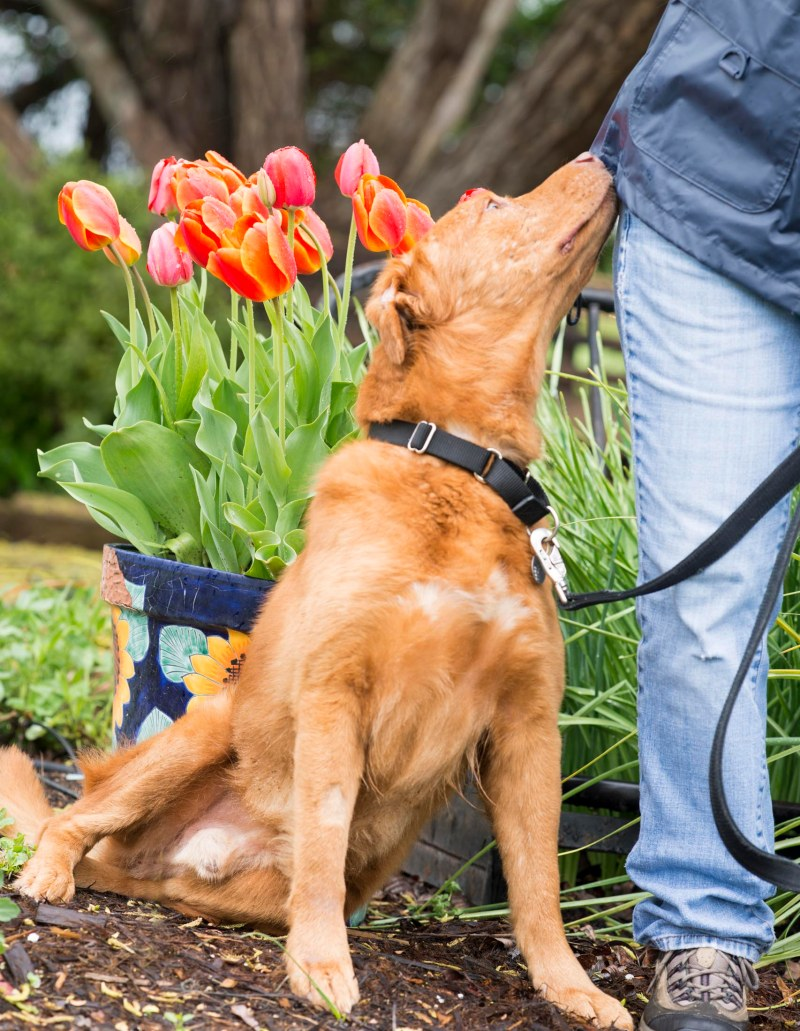 Image Result For Can Dogs Carry
