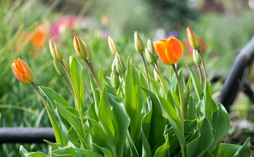 What's Blooming in theGarden